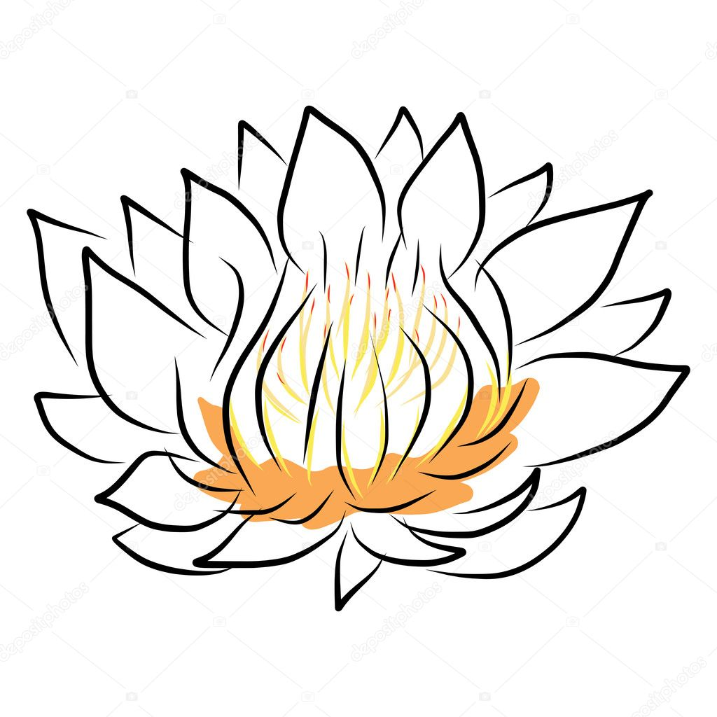 Main Dessin Nenuphar Lotus Fleur Image Vectorielle Atthameeni