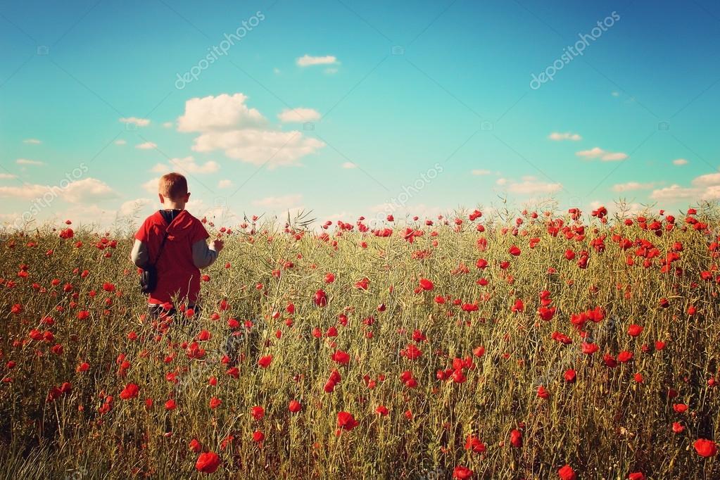 Little boy in the poppy field