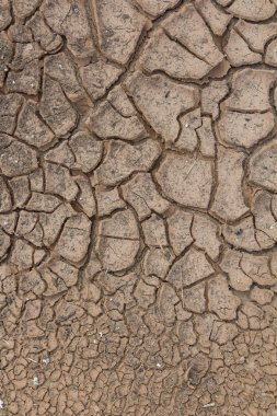 Cracks in dry soil.