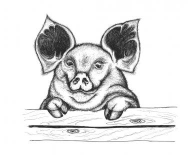 Pig behind fence