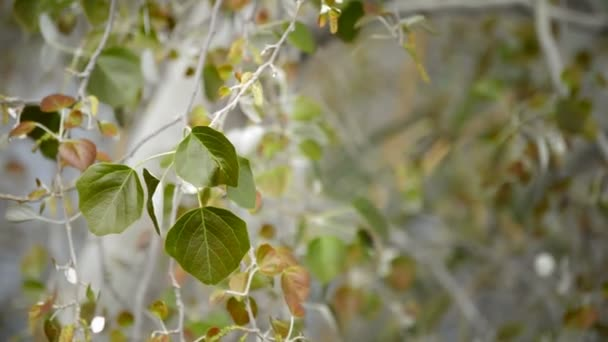 zöld levelek