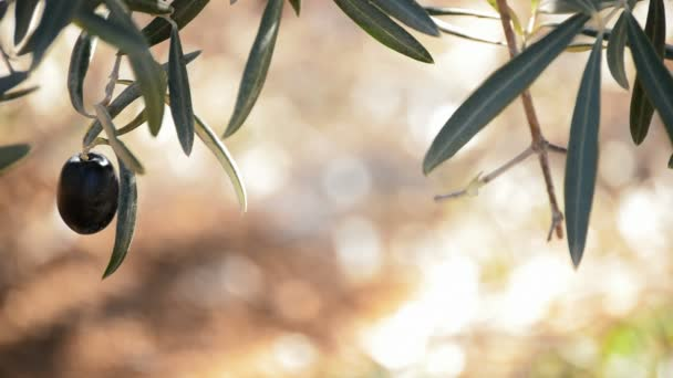 olivy v pobočce