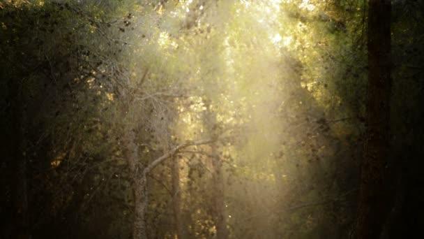 elvarázsolt erdő