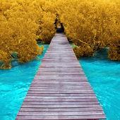 Fotografie dřevěný most