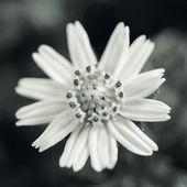 Malé žluté květy