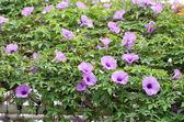 Fényképek lila virág