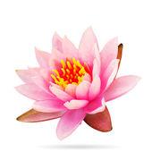 Lotus růžová