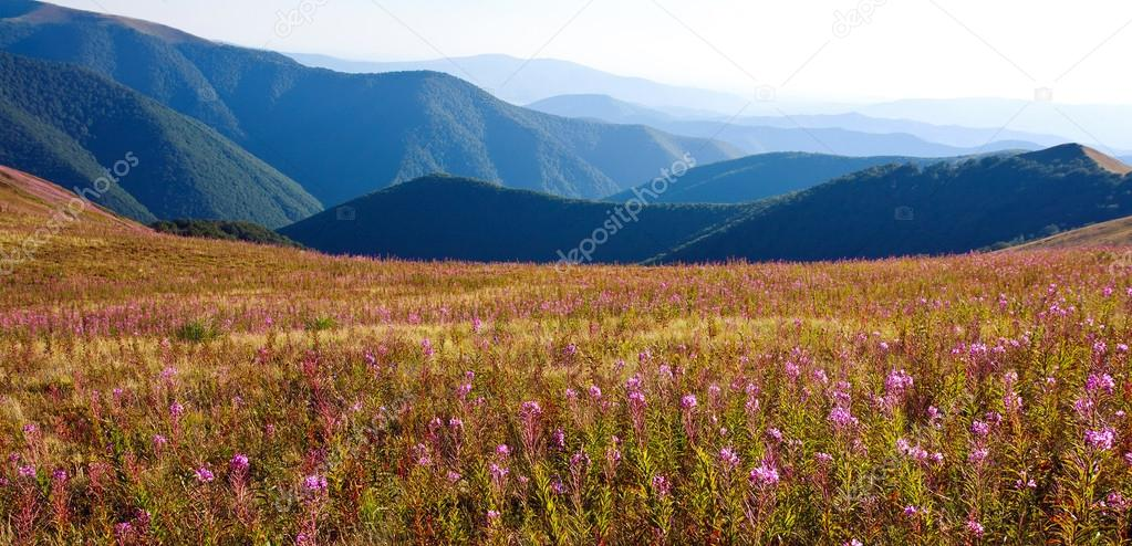 Nature panorama, beautiful landscape in Carpathian mountains