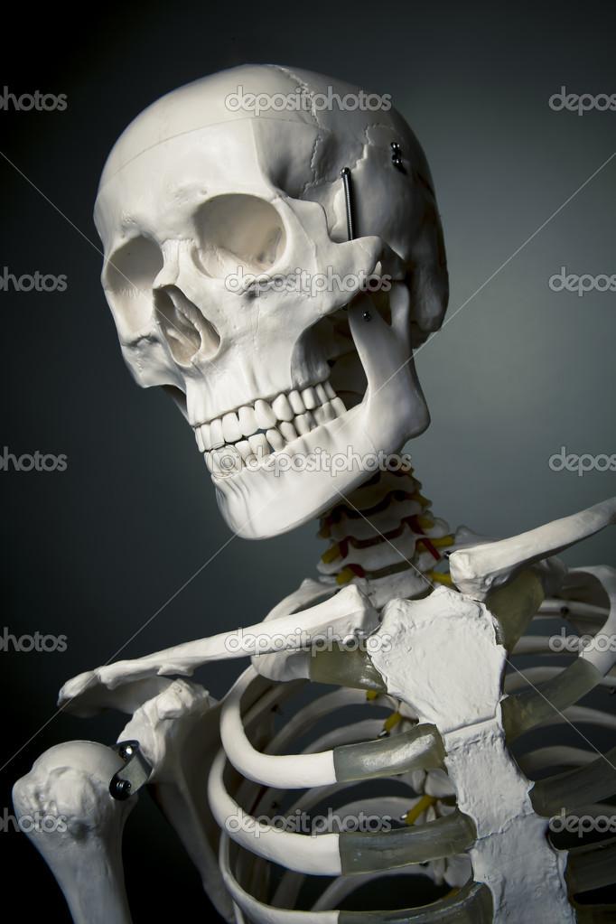 menschlichen Skelett Körper auf einem grauen Hintergrund — Stockfoto ...