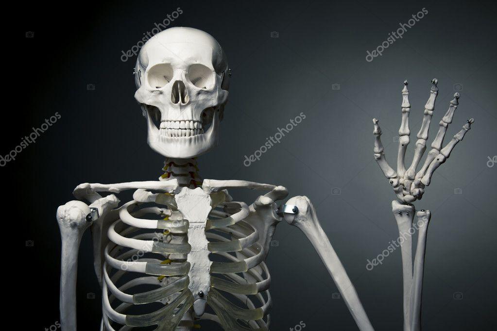 Happy human skeleton saying hello