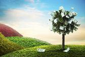 concept, money tree on grass