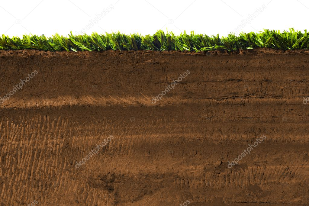 Cross section of grass isolated on white