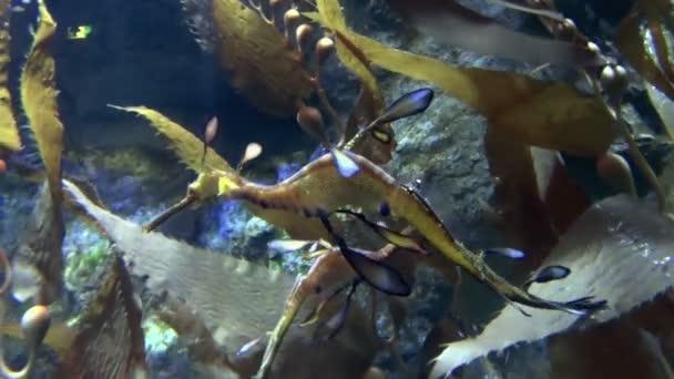 tengeri sárkányok, úszás