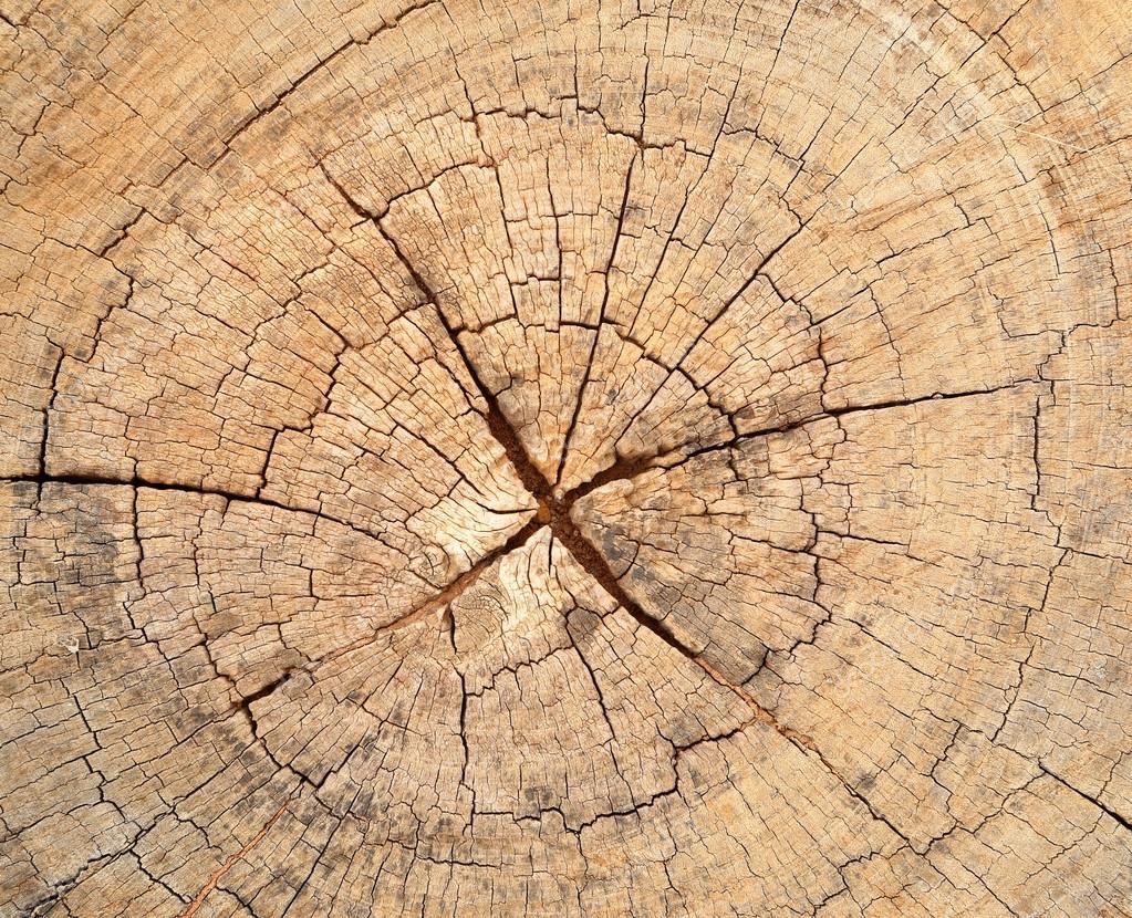 old tree stump texture