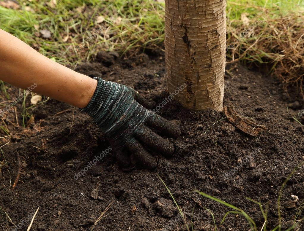 hand planted the tree in soil