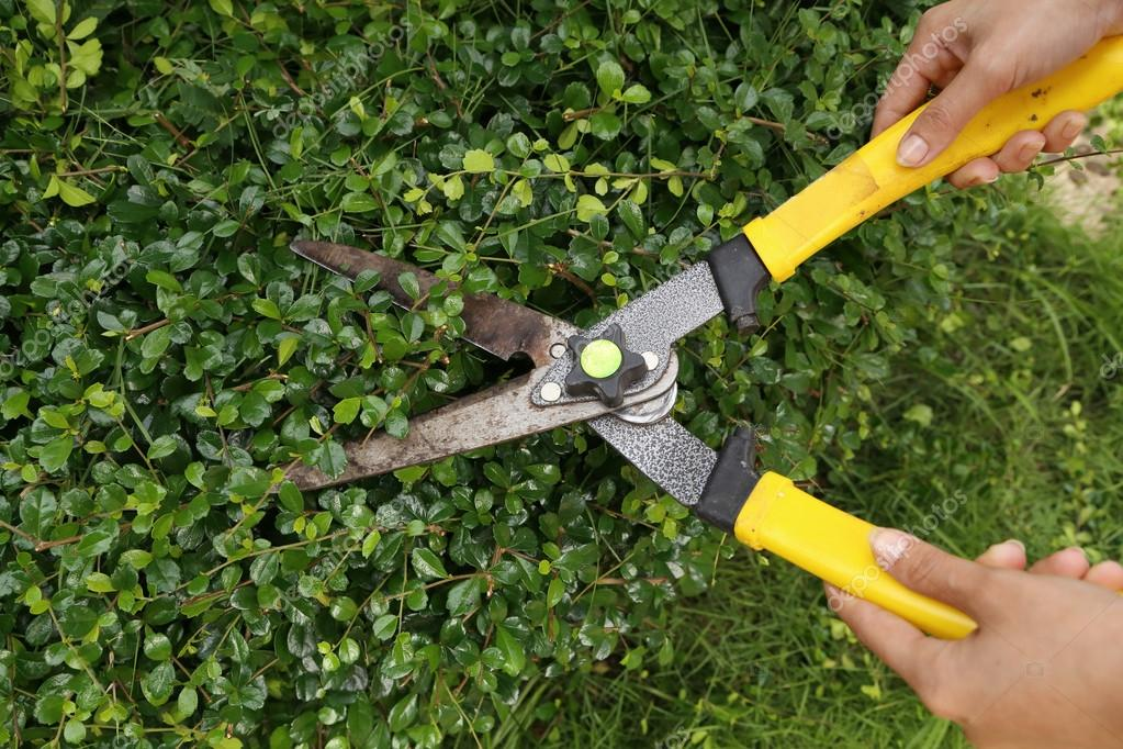 trimming bushes with garden scissors — Stock Photo © geargodz #34566123