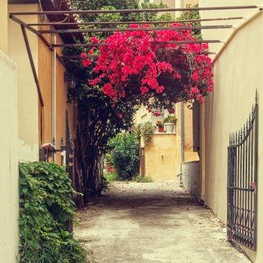 vintage streets of greek town