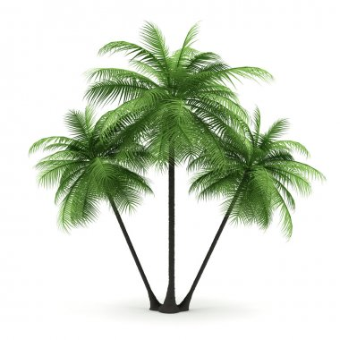 Green palms on a white background. 3d image.