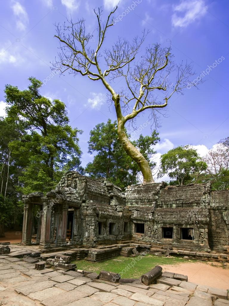 Prasat Ta Prum. Tree and Ruins.