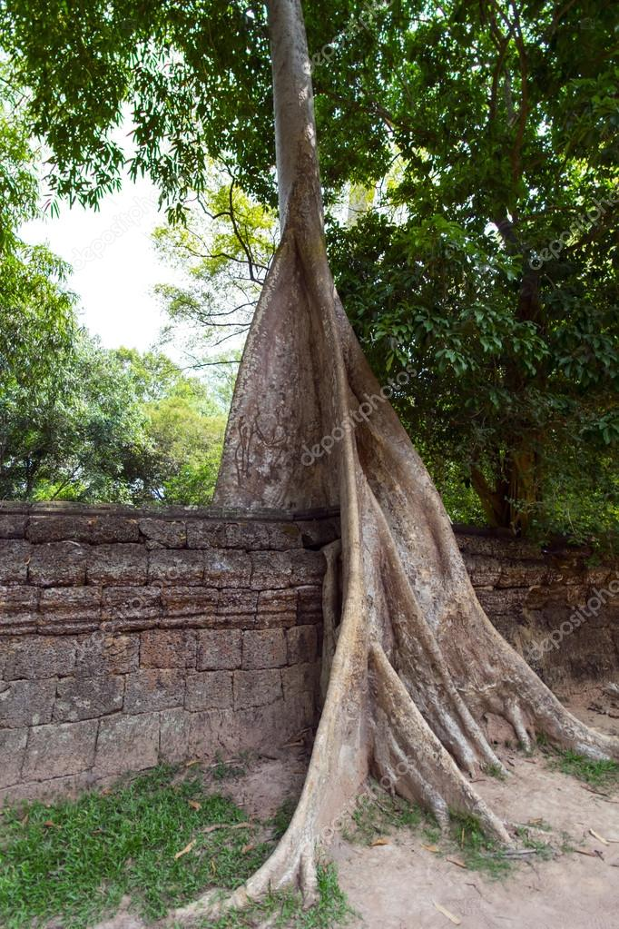 Prasat Ta Prum. Tree and Wall.