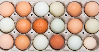 Colorful chicken eggs