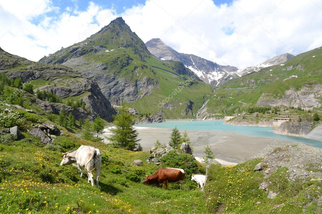 Mountains, glaciers and pastures Austrian Alps