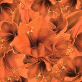 Fotografie Orange flowers, bouquet of gerber