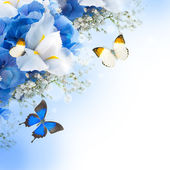 Flowers and butterfly, blue hydrangeas and white irises