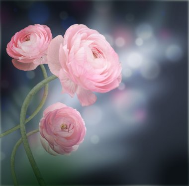 Bouquet of pink roses against a dark background