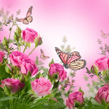 Delicate roses and butterfly