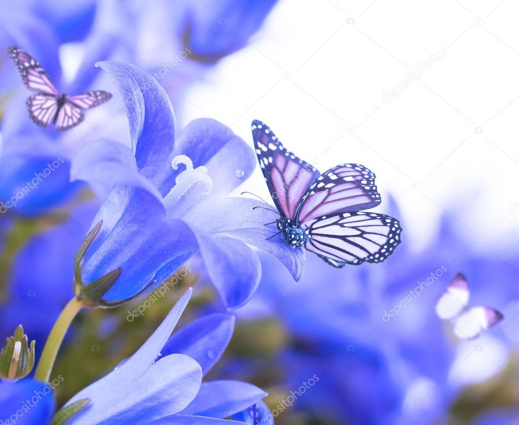 Синие колокольчики цветы фото