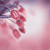 Fényképek tulipán virág háttér