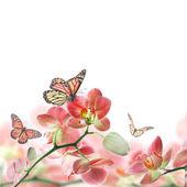 A trópusi orchideák és a pillangó virág háttér