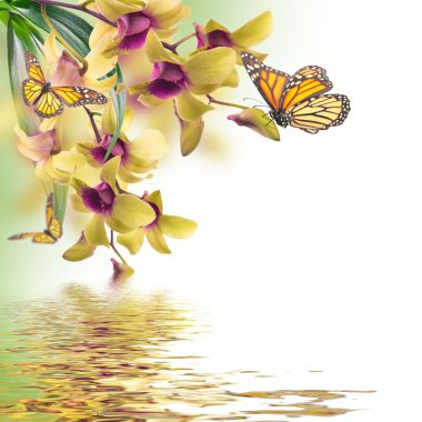 Tropical orchids and butterfly