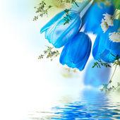 modré tulipány s mimóza