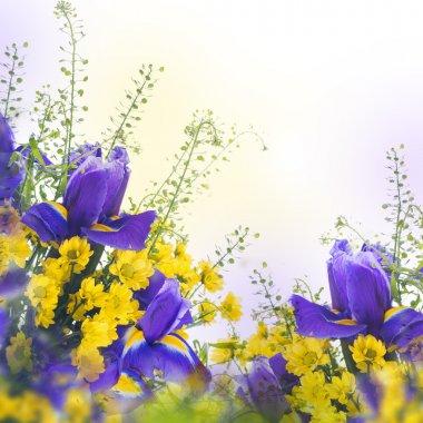 Blue irises with yellow daisies