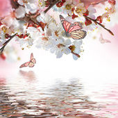 Fotografie meruňkový květy s motýly