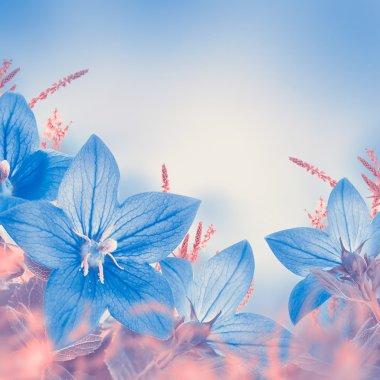 Bouquet of blue bells