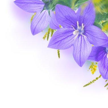 Bouquet of purple bells