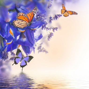 Blue irises with yellow daisies with butterflies