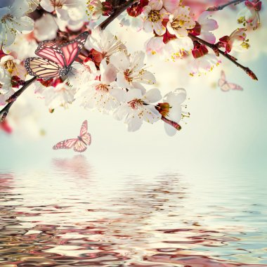 Apricot flowers in water reflection