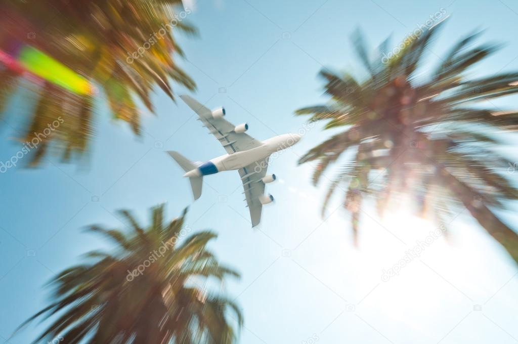 Air plane above palm trees.