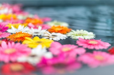 Beautiful multicolored flowers in water.