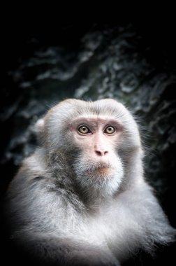 Portrait of cute little monkey with serious face.