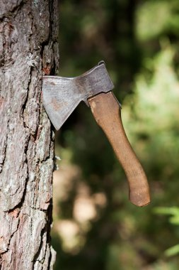 ax sticking in a tree