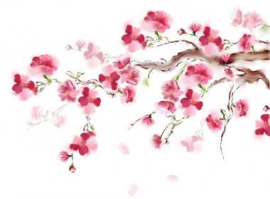 Blooming pink sakura on white background. Japanese tree cherry blossom isolated. High resolution art.