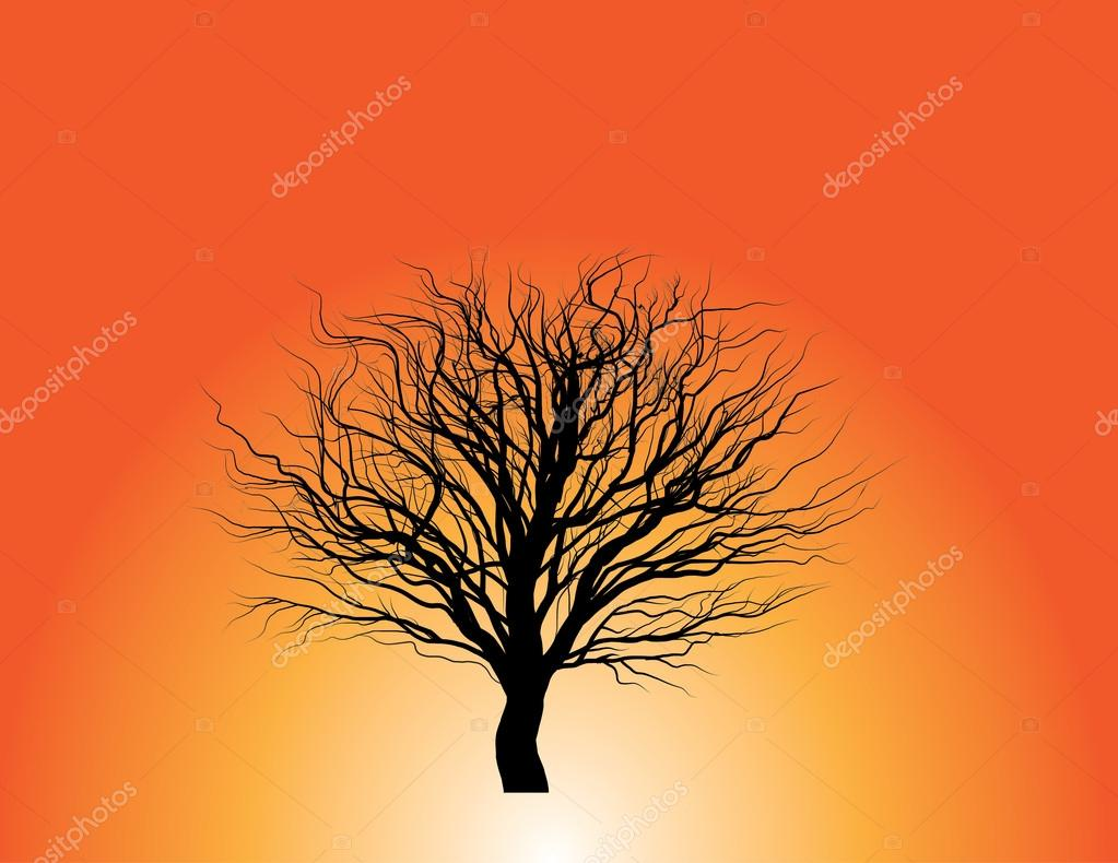 No leavves tree silhouette