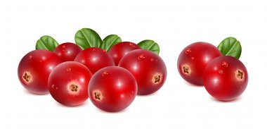 Cranberries with leaves and water drops