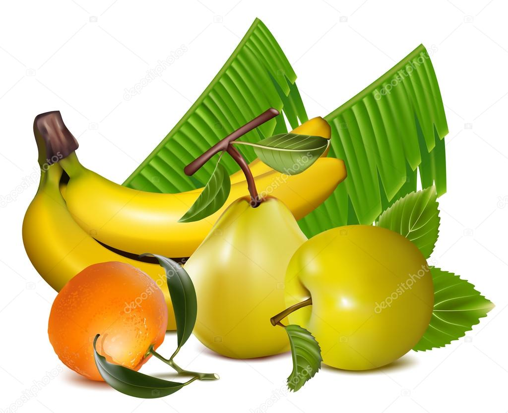 Vector illustration of fruits.