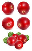 zralé červené brusinky